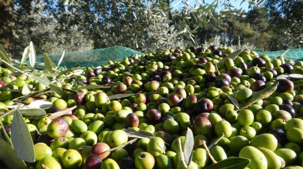 PROGEMA – Processi Green Per L'estrazione Di Principi Attivi E La Depurazione Di Matrici Di Scarto E Non